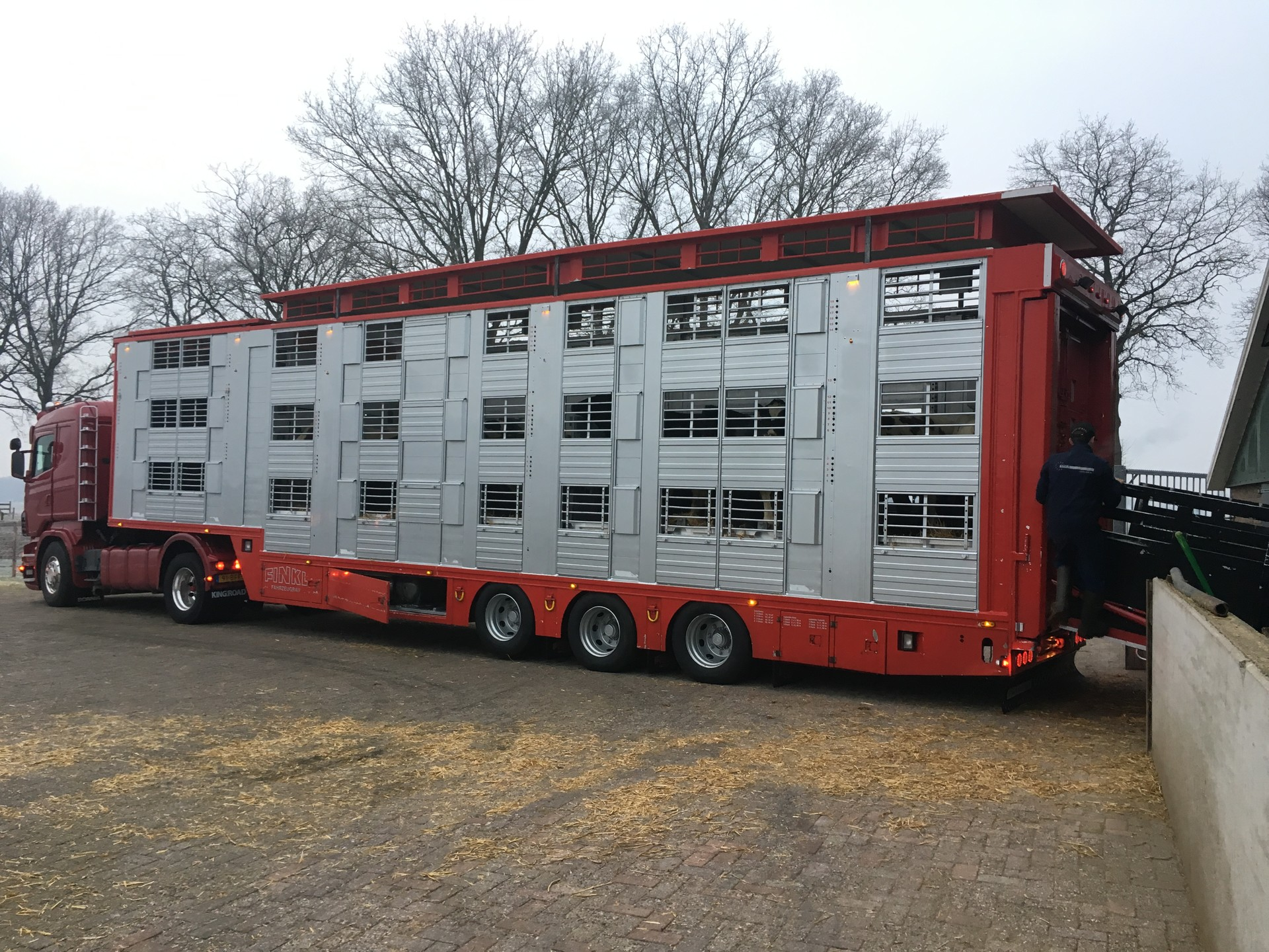 First shipment high quality breeding cattle to Pakistan
